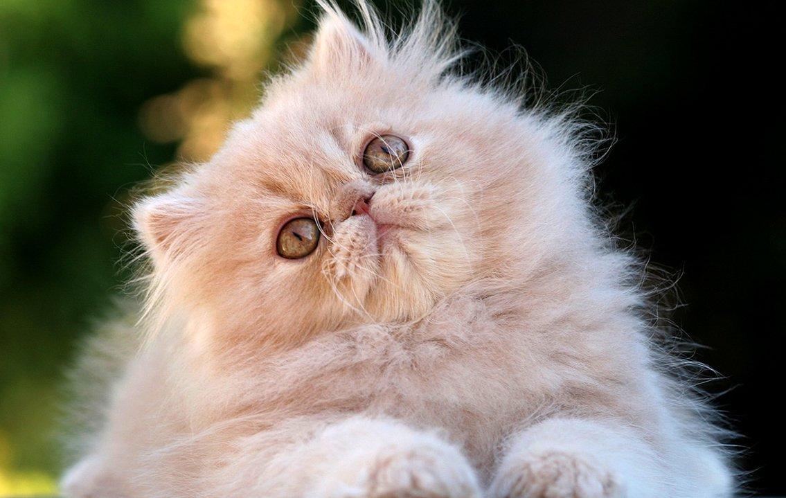 15 Fotos que te van a dar motivo para amar a los gatos