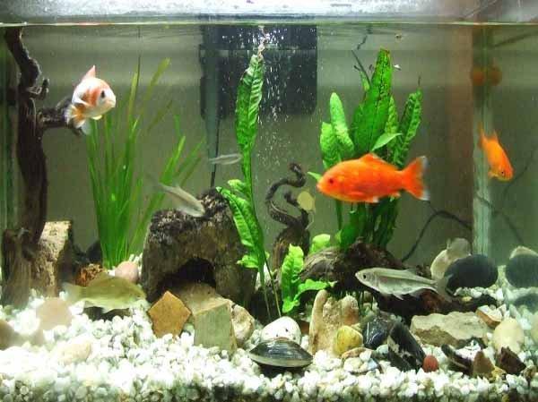 Los niveles a controlar en el acuario for Peceras con peces