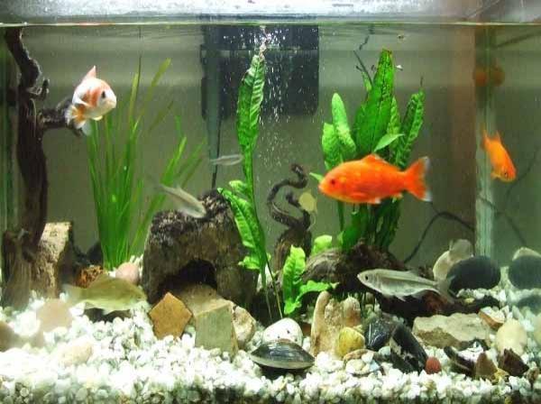 Los niveles a controlar en el acuario - Peceras en casa ...
