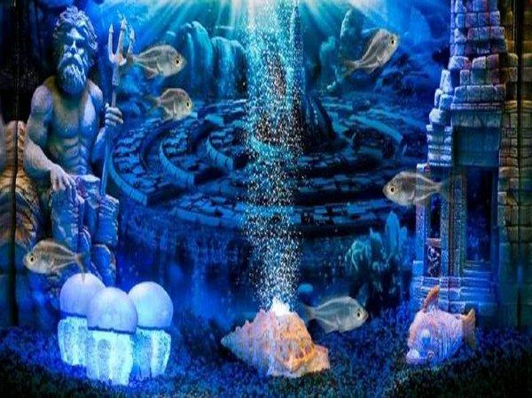 Luces de acuario confort para los peces o decoraci n - Decoracion de peceras ...