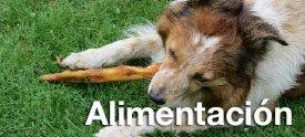 Alimentacion para perros