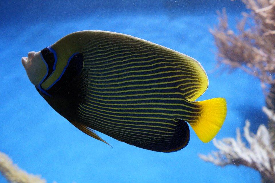 Los 10 mejores tipos de peces de agua dulce for Peces agua dulce